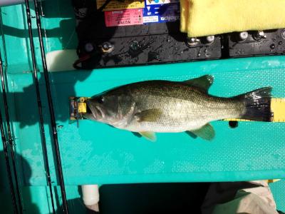 2014.9.3.亀山湖バス釣り OSP ドライブクローラー4.5 JHW 本湖 おりきさわ